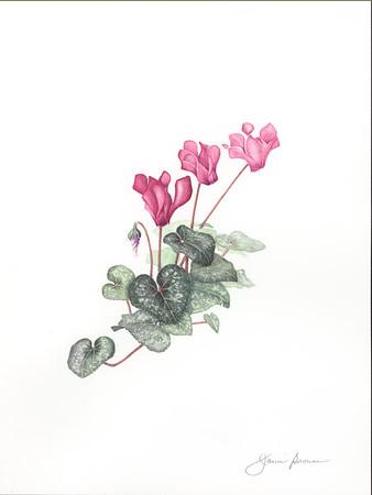 """Cyclamen - Watercolor & Colored Pencil (2016) 9"""" x 12"""""""