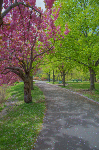 A Boston Pathway in Beautiful Color