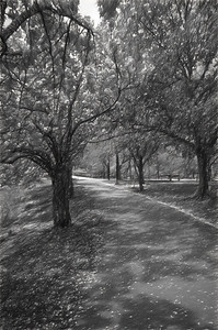 A Boston Pathway in Beautiful Black & White