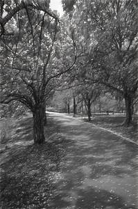A Boston Pathway in Beautiful Black & White