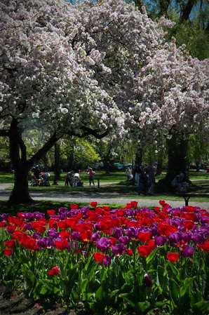 Colorful Spring in Boston