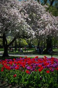 Colorful Spring in Boston