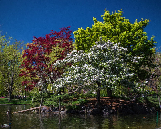 Boston Common Island