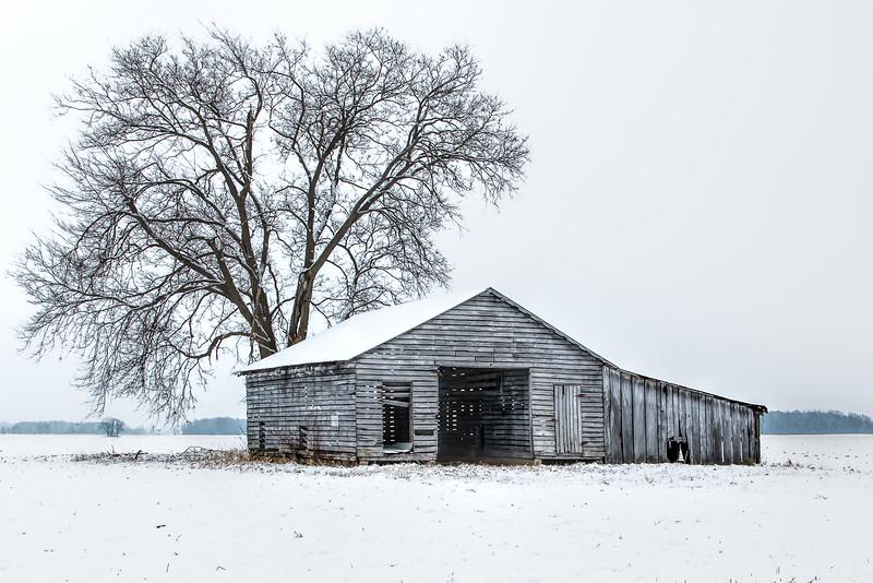 Old Friends- Winter