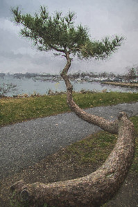Weathered Tree by the Water