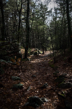 Early Spring Trail