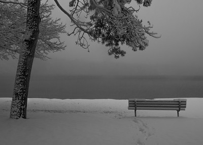 Tree and Bench During Snowstorm - 2016