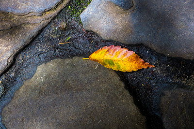 Leaf on the Path