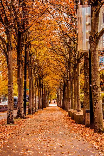 Autumn Sidewalk