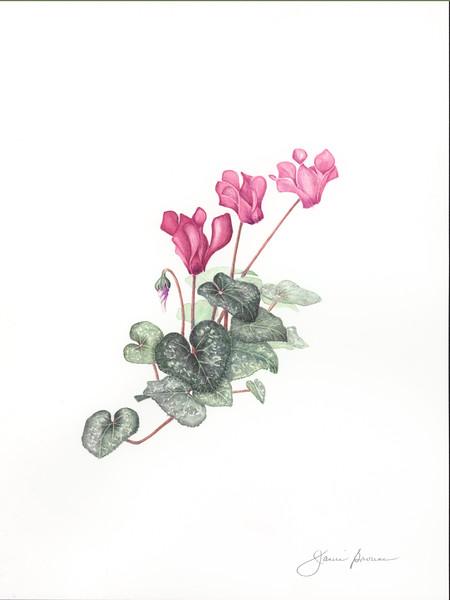 "<i>Cyclamen</i>  (2016) Watercolor &amp; colored pencil - 9"" x 12"""