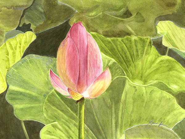 "Lotus - Watercolor (2015) 8.5"" x 11"""