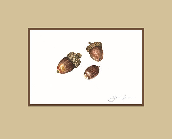 "Acorns - Watercolor (2015) 4"" x 6"" (excluding mat)"