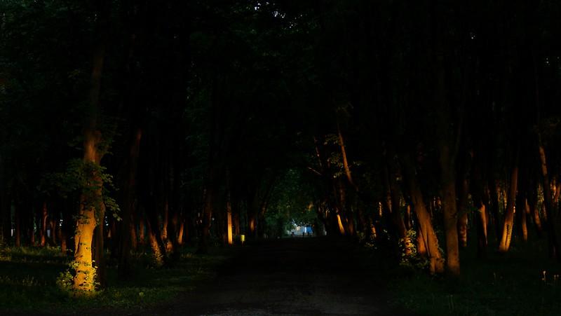 Парк. Вечір 17 травня 2017