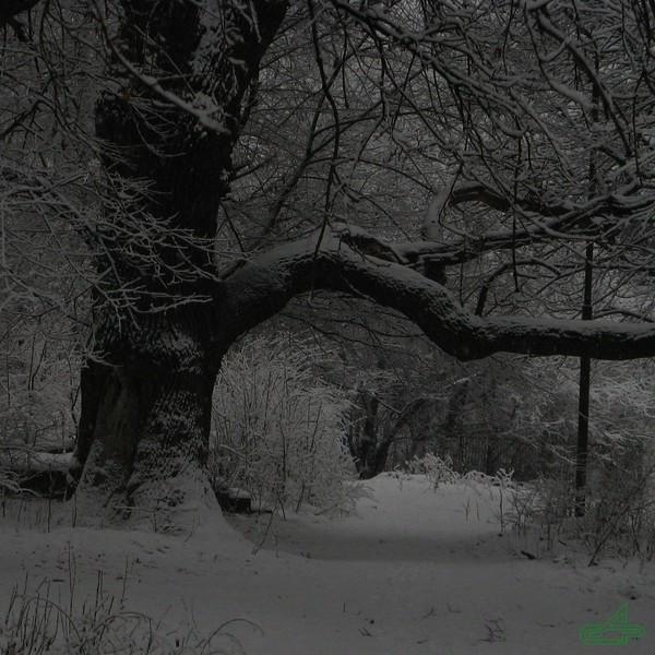Заліщики 2009, січень, 16. Нижній парк Старий. Самотній дуб.
