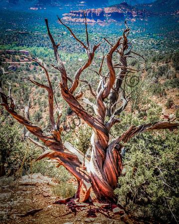 Sedona Arizona landmark -20
