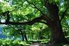 Парк Бруніцьких