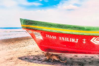 DSC07630 David Scarola Photography, Nicaragaua, Dog in Shade of Boat on Beach in Jiquilillo, sep 2017