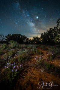 Desert Flowers Sedona