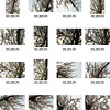 Fierro_COVER_CONTACT_SHEET