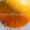 03-04-09 Great Balloon,Copyright Charlie Groh,All Rights Reserved