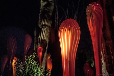 Phoenix Botanical Garden, 2009
