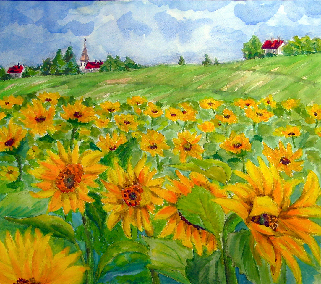 A Hill of Sunflower #1