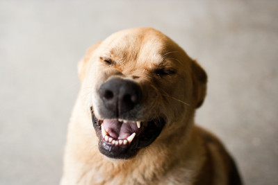 I Didn't Know a Dog Can Laugh, 2010