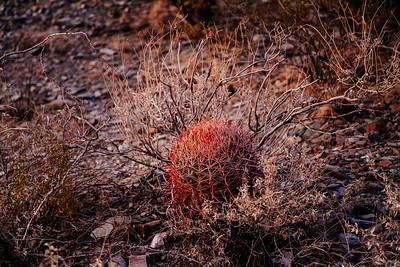 Phoenix, Arizona 2006