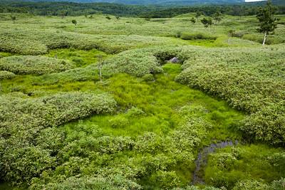 Shiretoko wetland, Hokkaido, 2010