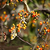 Berries Bush Red Yellow Macro