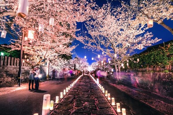 Cherry blossom lantern festival at Honmyō-ji in Kumamoto.