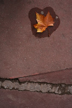 Leaf after rain, Montrouge, Paris, France, 2011