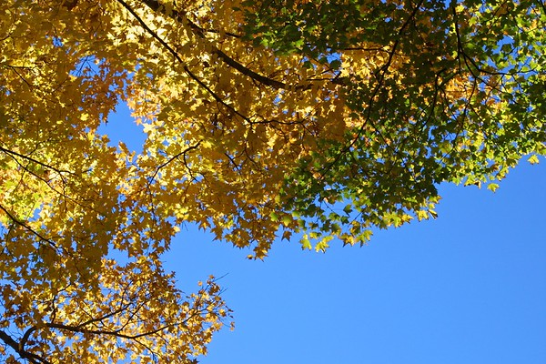 Yellow, Green & Blue, Amherst, Massachusetts, USA, 2007