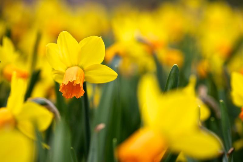 Glorious Spring