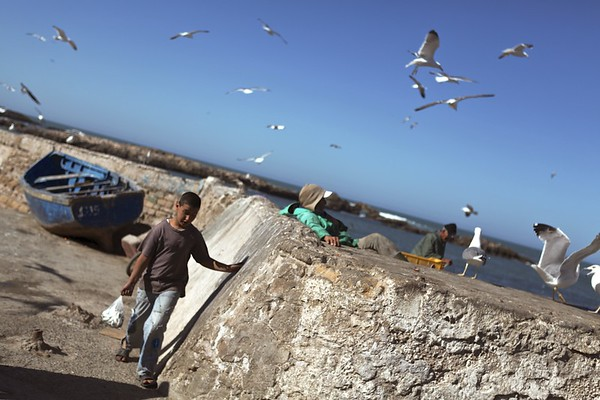 Catch of the day, Essaouira, Morroco, 2012