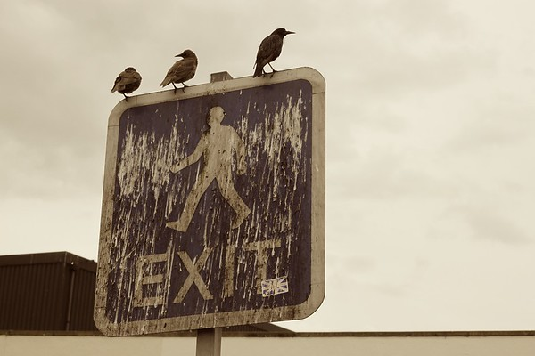 Birds on sign, Leeds, Yorkshire, UK, 2010