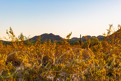 San Tan Golden Hour