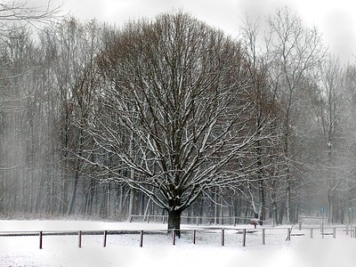 SNOW000014