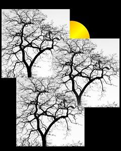 obie tree1
