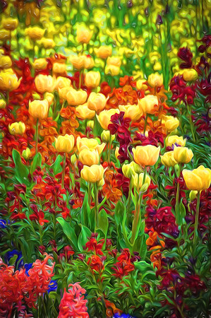 Royal Tulips