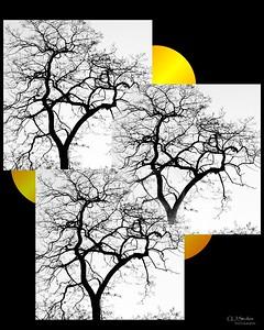 obie tree3ss