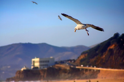 Hang Gliding over the Cliff House