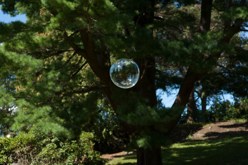 """The Uncanny: Extension of Self,  DeCordova Bubble, 2011, 17""""x22"""""""