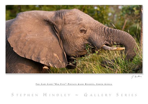 The Big Five - Elephant
