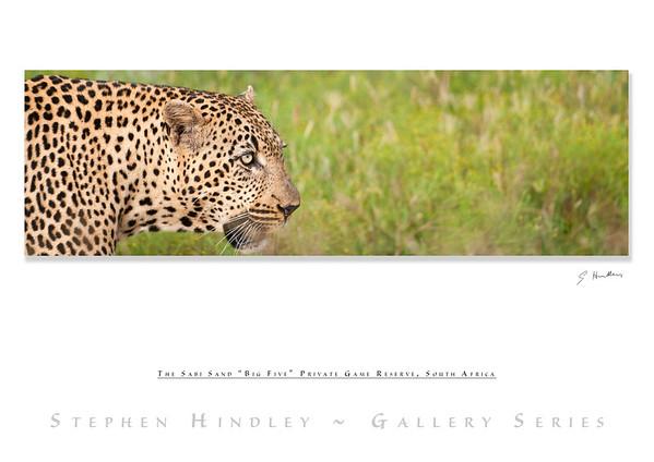 The Big Five - Leopard