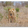 Mombasa and Tsavo East, Kenya safari.  Aug 18-22, 2011. Photo by: Stephen Hindley ©