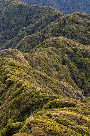 Neill Ridge beech forest, Tararua Forest Park, New Zealand