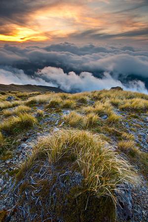 Windswept tussocks, Field Peak, Tararua Forest Park