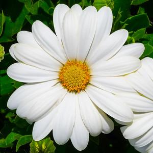 Flowers-12edited