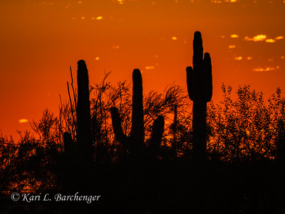 Sunset-010124